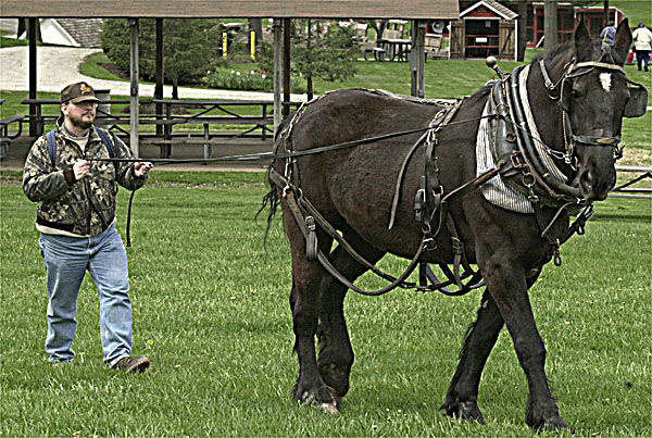 Tom Harbold at a draft-horse driving workshop Carroll County Farm Museum, in Westminster, Maryland