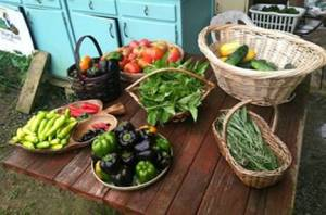American Chestnut Land Trust  Double Oak Farm CSA …Connecting people with the land
