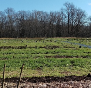 Building Soil at Double Oak Farm: farming for hunger and community supported agriculture at the American Chestnut Land Trust in Calvert County, Maryland